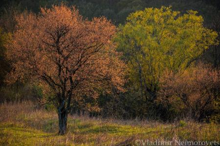 Ilsky neighborhood_Krasnodar Territory_MG_8438