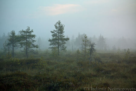 Lazarevskoe Swamp_Leningrad region_IMG_0375