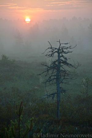 Lazarevskoe Swamp_Leningrad region_IMG_0415